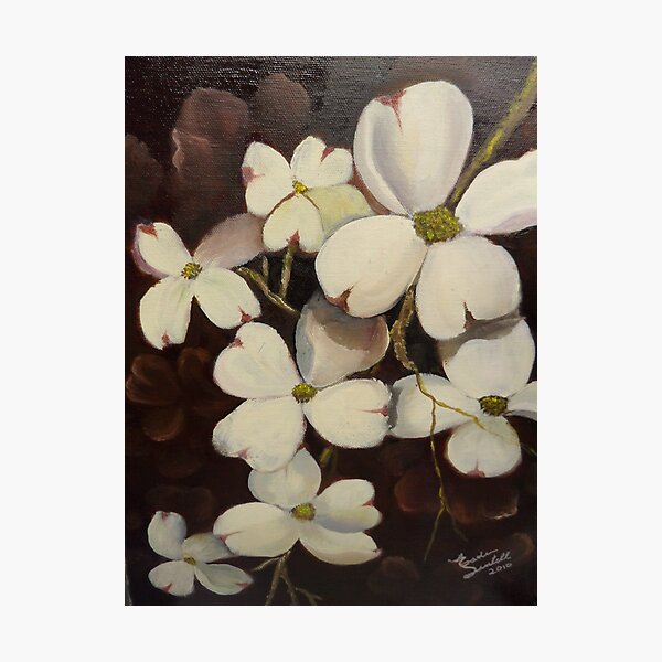 White Dogwood--Spring time in Tennessee Photographic Print