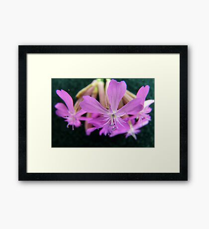 Suspended Beauty Framed Print