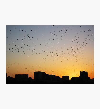 Birds on sunset Photographic Print