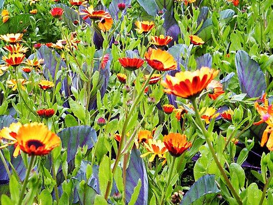Flowers, Donegal by colettelydon