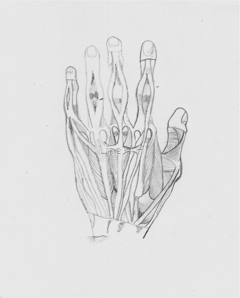 Anatomy Hand  by Line H H