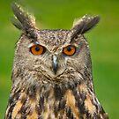 Eagle Eye Owl by Daniel  Parent