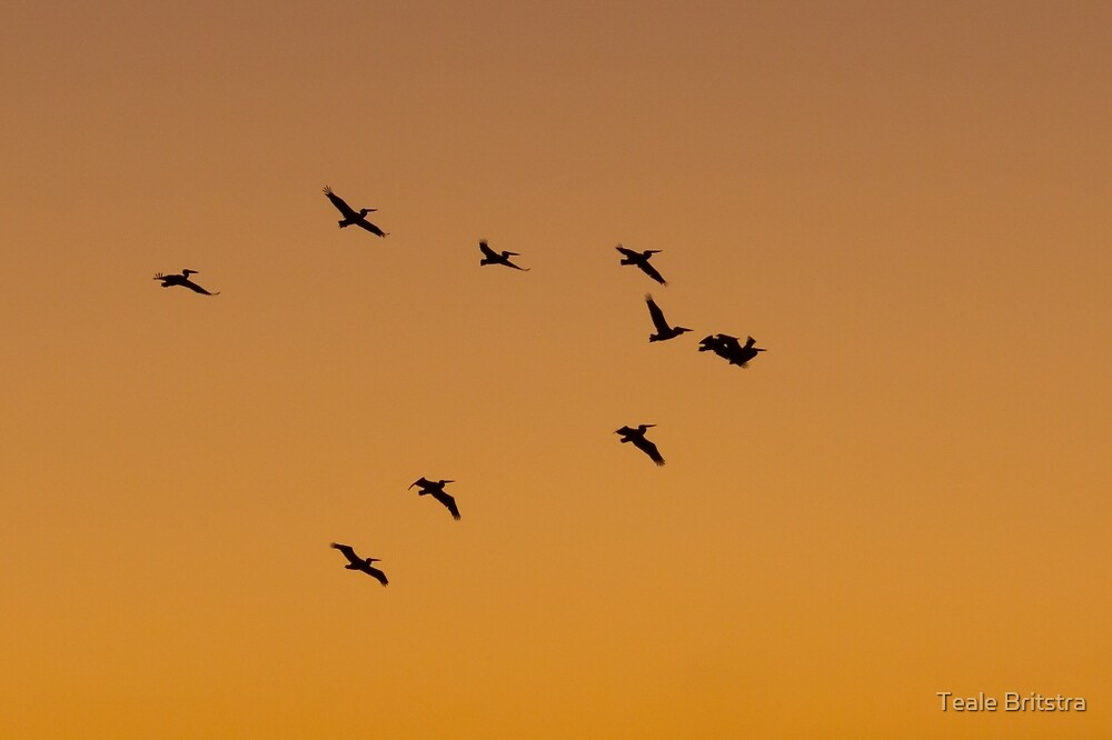 Pelicans at Sunset by Teale Britstra