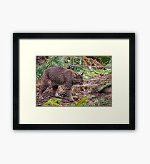 What About Bob???? Framed Print