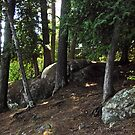 Boulders and Trees, Lac Philipe, Quebec, ON by Shulie1