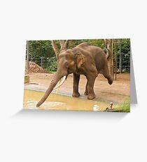 Elephant Tai Chi Greeting Card