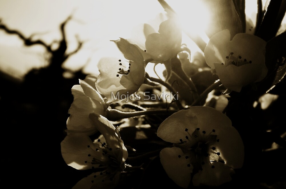 Against The Sun by Mojca Savicki