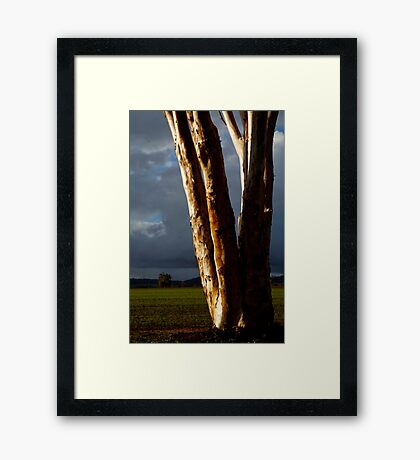 plant types #70, aglow Framed Print