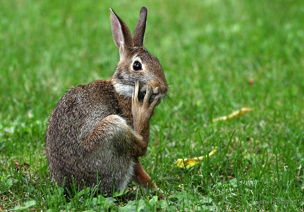 Worried Wabbit Or Bemused Bunny ? by Gary Fairhead