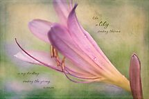 Watercolor Lily by JulieLegg