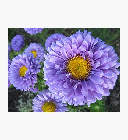 Dream of Flowers Photographic Print