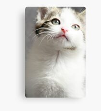 Grey and White Kitten Canvas Print