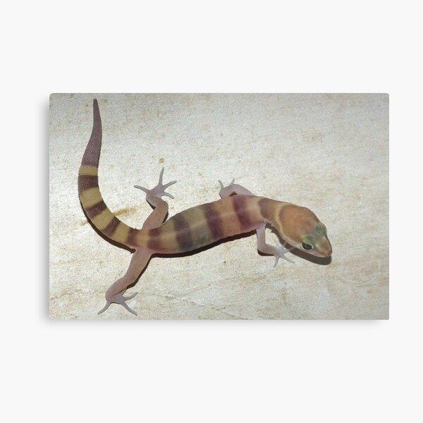Tucson Banded Gecko Metal Print