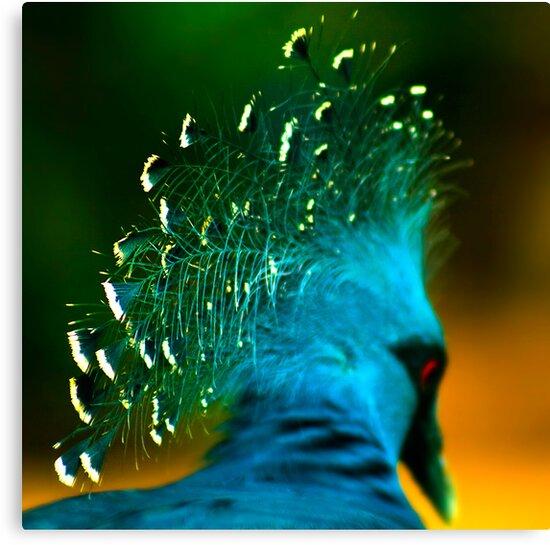 Victoria Crowned Pigeon by Damienne Bingham