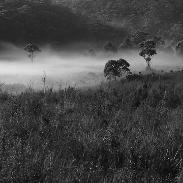 Misty Morn by phillip24