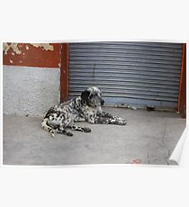 Black and White Dog on a Sidewalk Poster