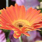 Pretty Petals by Lorin Richter