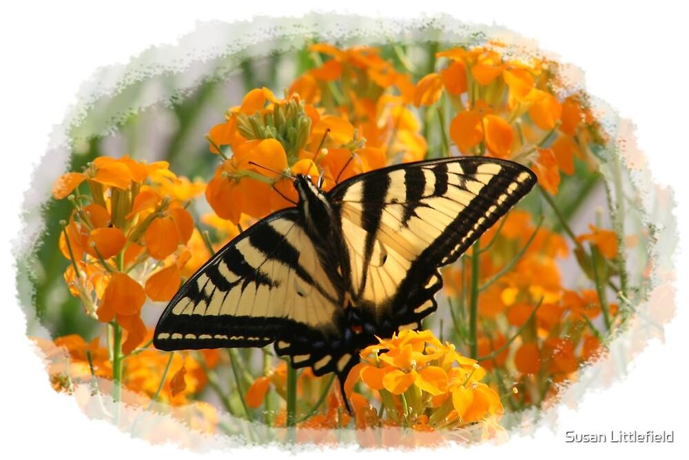 Swallowtail by Susan Littlefield