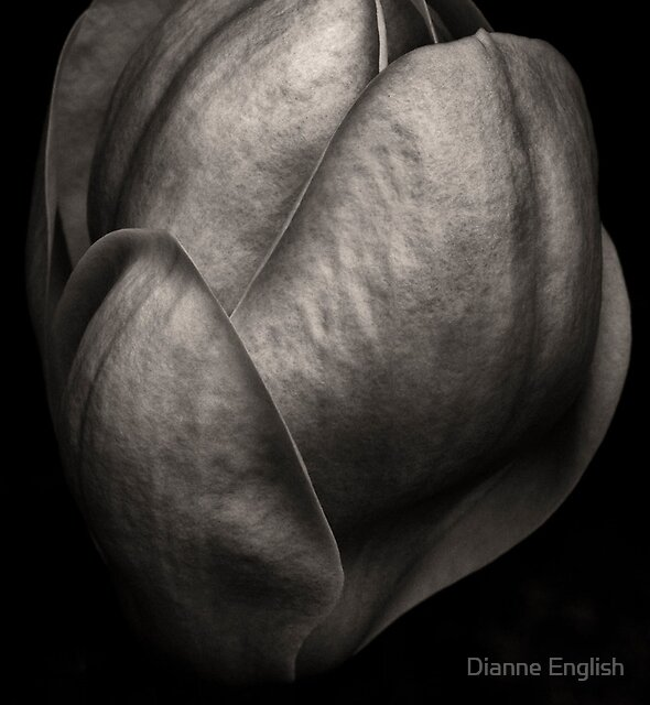 Magnolia Monument by Dianne English