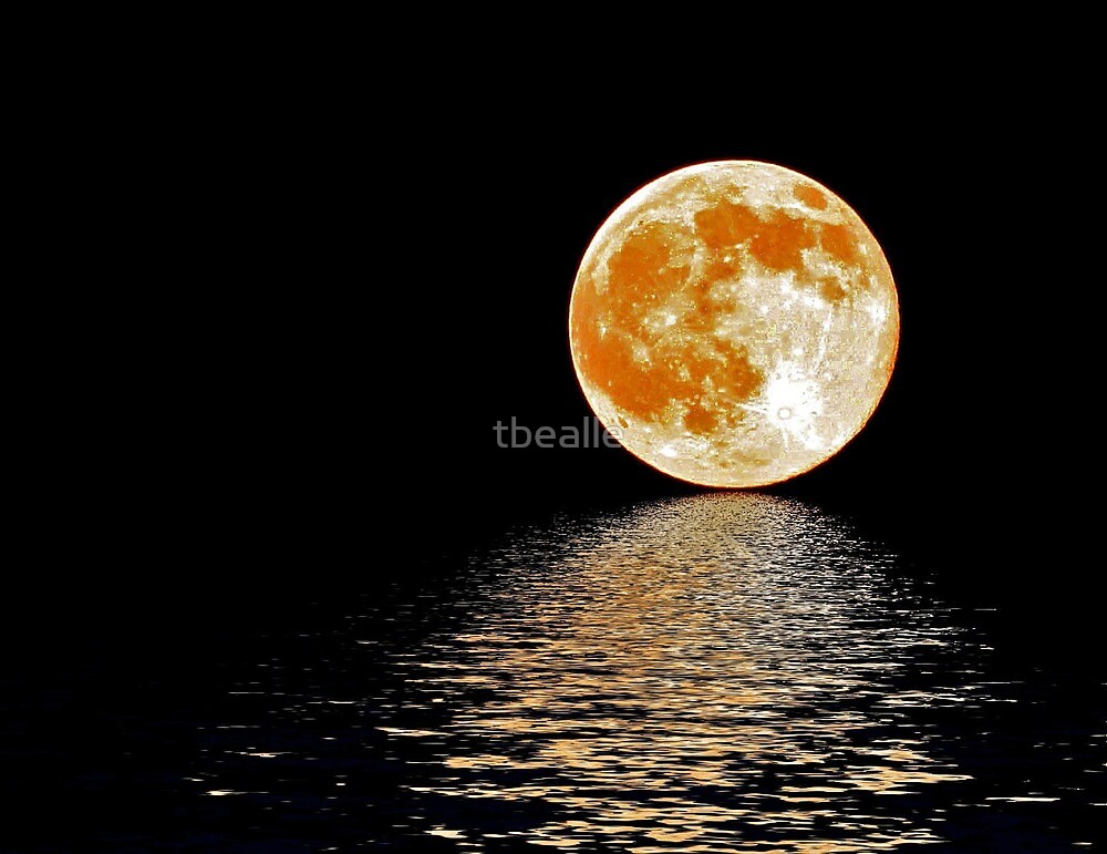 Moon~Rising by Terri~Lynn Bealle