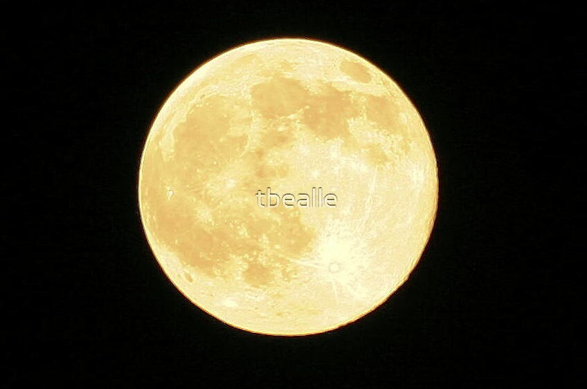 The Moonlight is Shining Upon You! by Terri~Lynn Bealle