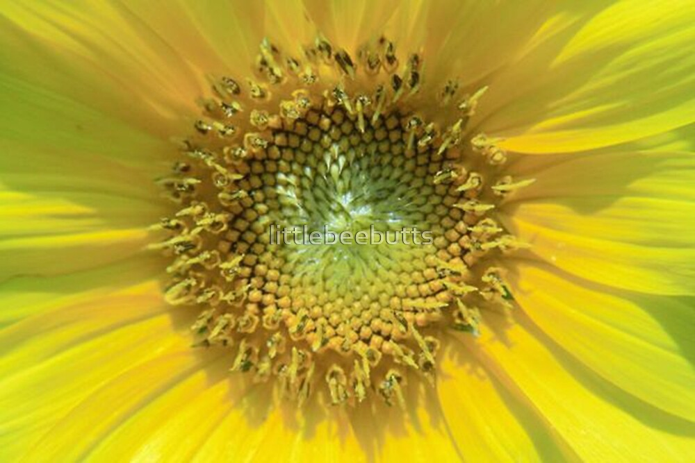 sunflower (100% less bees) by littlebeebutts