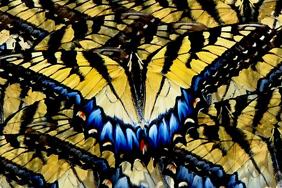 Butterfly by NatureGreeting Cards ©ccwri
