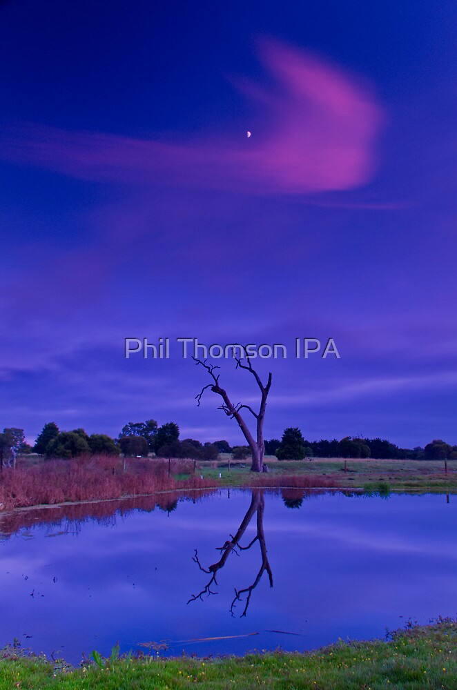 """""""A Splash of Pink"""" by Phil Thomson IPA"""
