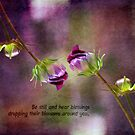 Be still and hear blessings by Myillusions