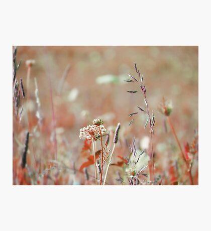 summer grass 20 Photographic Print
