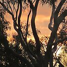 My home among the gum trees by Donna Keevers Driver