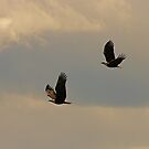 Eagles and clouds by Al Williscroft