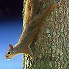 Squirrel Pause by glennc70000