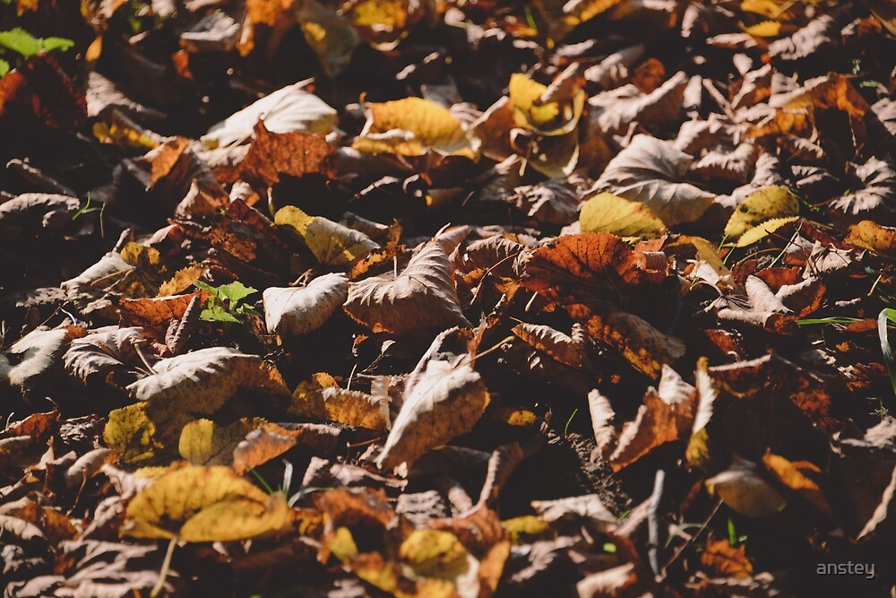 Autumn Leaves by anstey