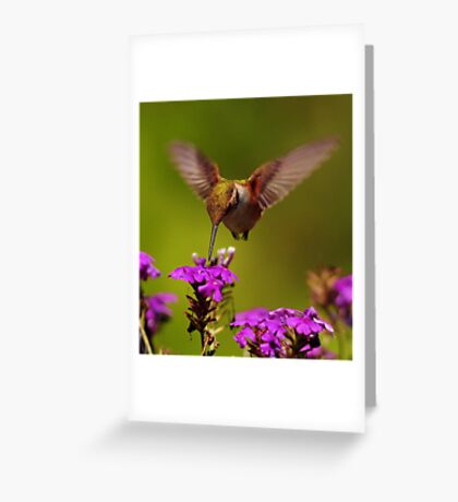 Hummmmmm---ing  for  Nectar..~ Greeting Card
