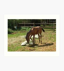Natural horsemanship Art Print