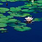 lilly pad Blue by browncardinal8