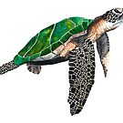 Turtle #2 by wendish