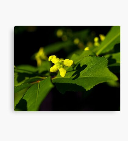 Plant with a Face Canvas Print