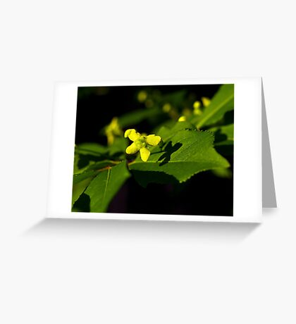 Plant with a Face Greeting Card