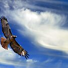 Red Tail, Big Sky by KarDanCreations