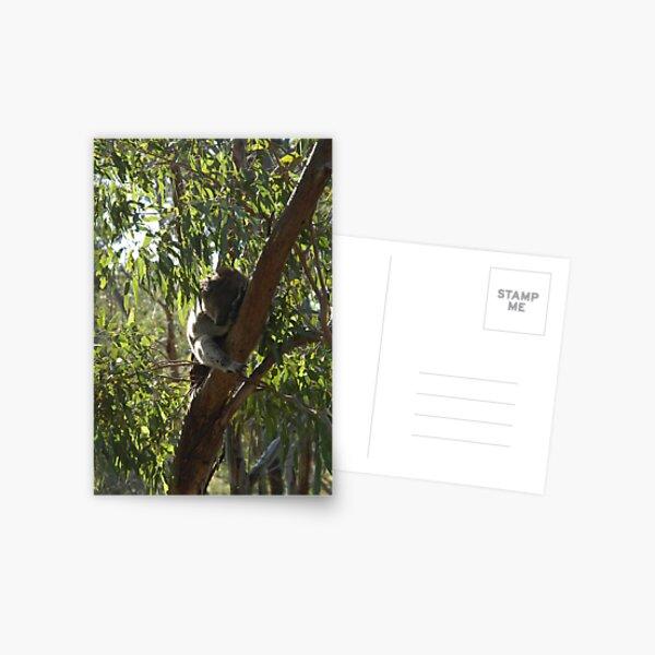 Sleeping Koala Postcard