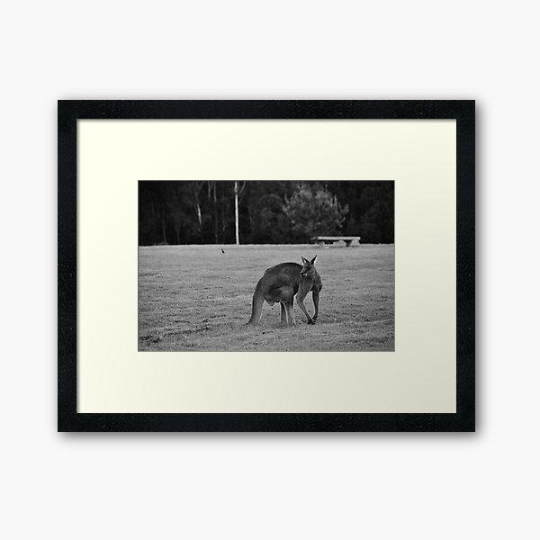 Eastern Grey Kangaroo (black and white) Framed Art Print