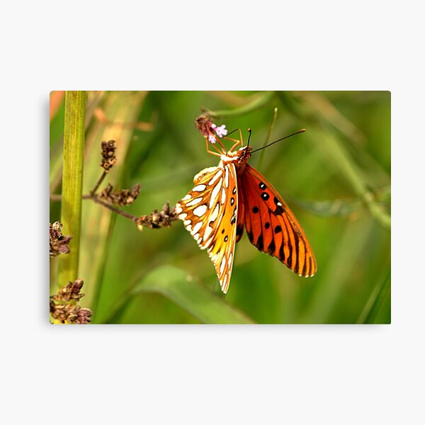 Winter Butterfly Canvas Print