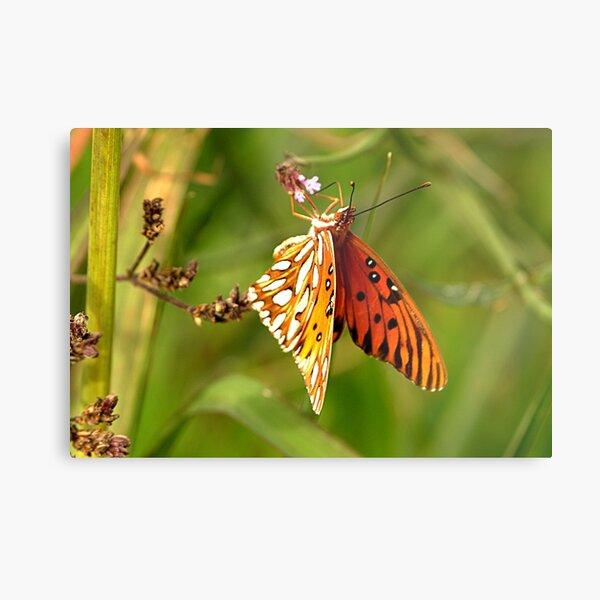 Winter Butterfly Metal Print