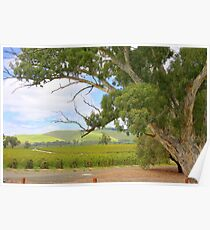 Barossa Valley Poster