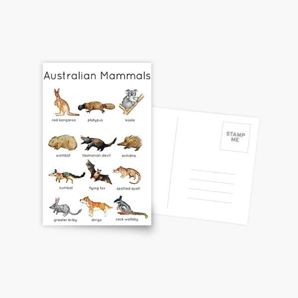 Australian Mammals ID Postcard