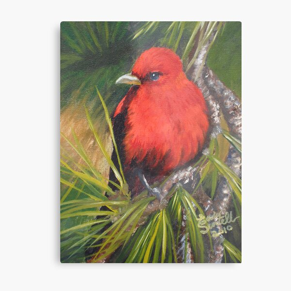 Scarlet Tanager--A Study of Wild Birds Metal Print
