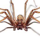 Spider by Bartosz Chajek