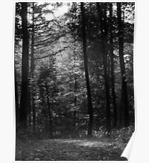 Big Forest Trees Poster